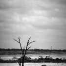 Alone by Ashli Zis