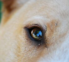 Through The Eyes of a Dog by Taylor Russell