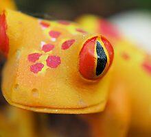 Plastic Froggy by Donna Adamski