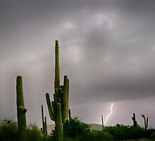 Sonoran Monsoon Lightning Thunderstorm Delight by Bo Insogna