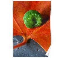 Autumn Caterpillar Poster