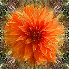 Chrysanthemum by Tom Romeo
