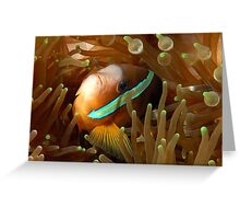Clarkes Anemonefish Greeting Card