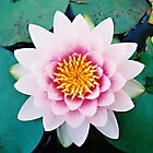 Water Lily - Close Up by Melissa Holland