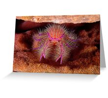 Hairy Squat Lobster Greeting Card