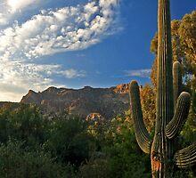 Desert Dawn by Sue  Cullumber