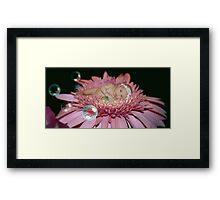 Midnight Blossom (In Color) Framed Print