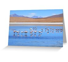 A Scatter of Flamingos :) Greeting Card