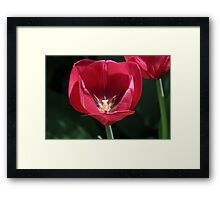 Red For My Love Framed Print