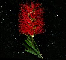 Flowers from Heaven: Bottlebrush by Kirsten Spry