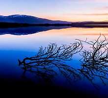 Loch Garten by Portybear