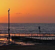 pelican sunrise by Alex Marks