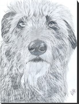 Shaggy. by Peter Allton