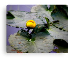 Rocky Mountain Lilly Pad Canvas Print
