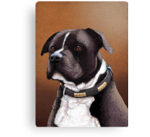 Staffordshire bull terrier 2 Canvas Print