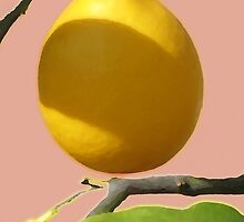 Lemon Tree by Irene Walters