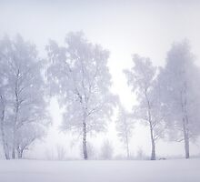 Ghostly Trees in Winter Mist by JennyRainbow