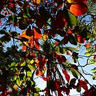 colors of the nature I - colores de naturaleza by Bernhard Matejka