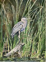 Blue Heron by J-C Saint-Pô