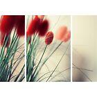 Rouge by Rachmat Lianda