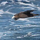 Northern Giant Petrel by Robert Elliott