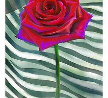 Solo Red Rose by Seema