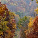 Fall Country Drive by DiEtte Henderson