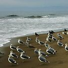 Gulls on Morning Watch. by Barbara  Brown