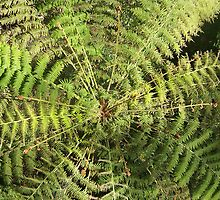 tree fern from the Fly Walk by Coloursofnature