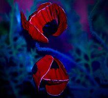 Poppy clams by Alina Holgate