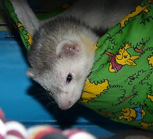 Silver harlequin Ferret with blue eyes by bigbizarre