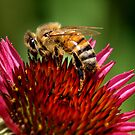 Sweet Nectar by Luis Correia