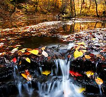 Talley's Branch Fall by J. Scott Coile