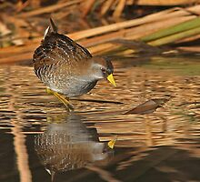 Sora Rail by tomryan