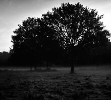 Simple Trees with Mist by WillOakley