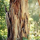 Gum Tree Trunk by Jenny Brice