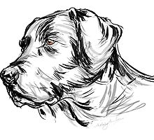 Labrador Retriever by BonniePortraits