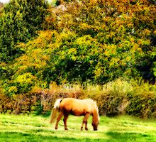 Grazing In Autumn by WJPhotography