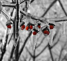 Red Burr-ies by jessawa21