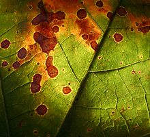 Leaf by DesignsByDeb