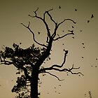 Crow tree by Amanda Gazidis