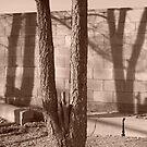 shadow wall by David owens