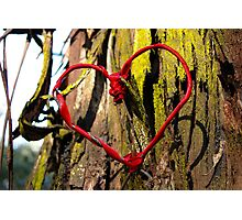 In the Heart of the Forest - romantic trees and ribbon heart photograph Photographic Print