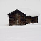 Wooden barn by Steve plowman