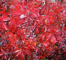 Autumn Vine by Braedene
