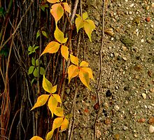 Autumnal pictures by YanBi