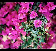 Fucsia Flowers by Miriam Casarini