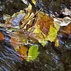 Swirling leaves by cherylc1
