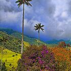 Columbia. Cocora Valley. Blooming Bushes and Wax Palms. by vadim19