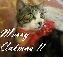 Merry Catmas !! by Melissa Park